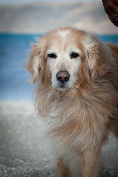 dog portrait by lake