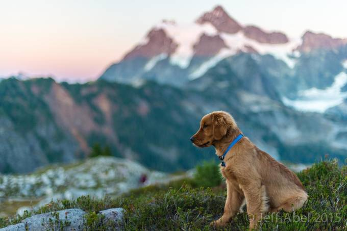 First Mountain Adventure by Zeattle - Pets With Character Photo Contest