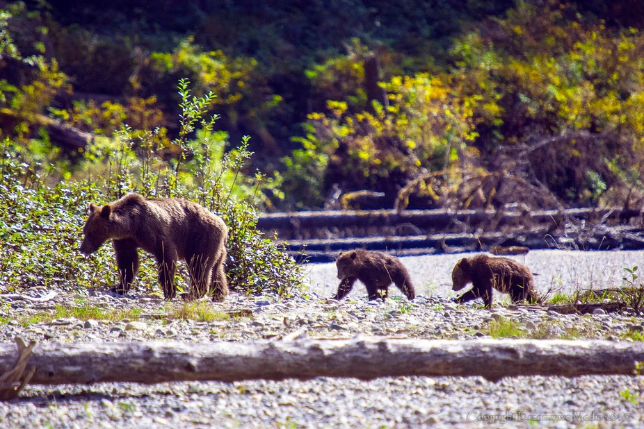 From one of my previous Grizzly Bear video & photo shoots up the Bute Inlet in British Co...