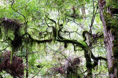 Warburton Tree Tops