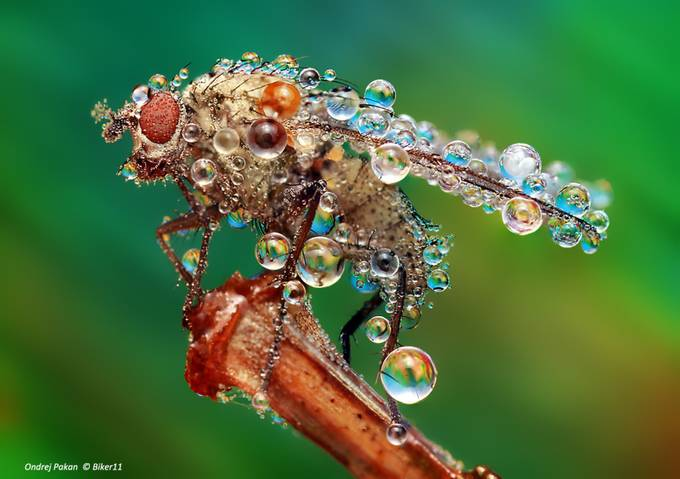 1.2.3   Start by biker11 - Macro Water Drops Photo Contest