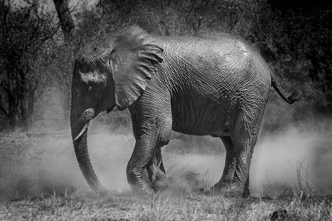 Dust Bath 2 by annamarieharding - A Black And White World Photo Contest