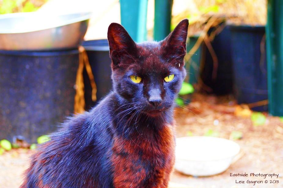 The Black Cat of Finn Slough
