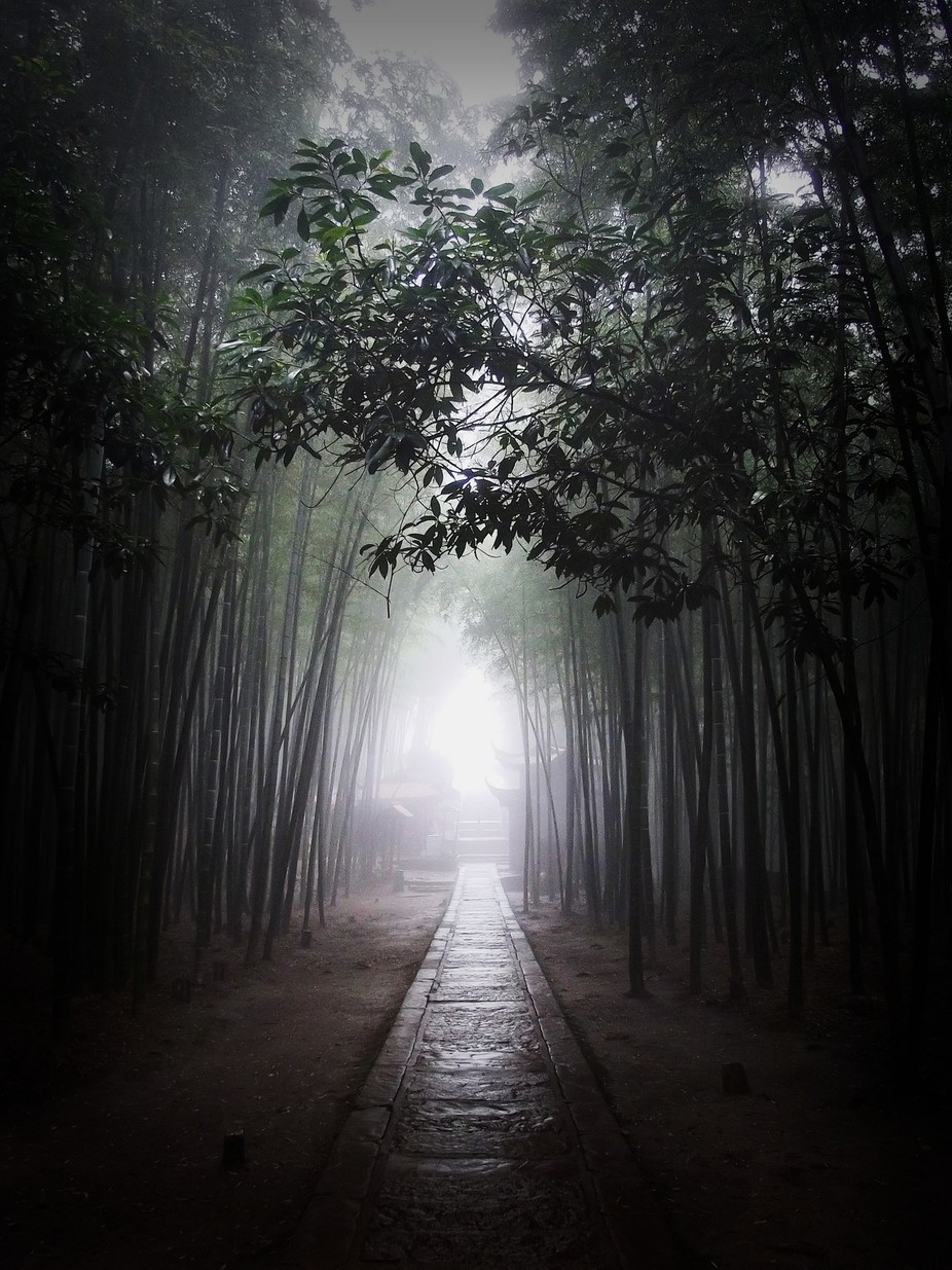 Foggy morning in Southern Sichuan Bamboo Sea by norahamucska - Explore Asia Photo Contest