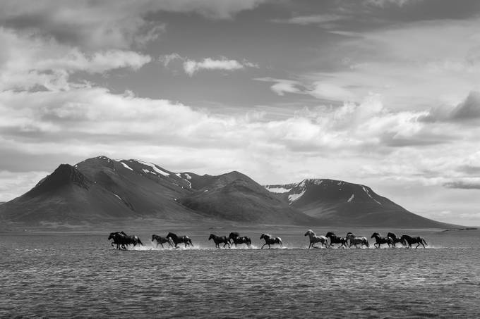 Icelandic Horses by Masher - Black And White Landscapes Photo Contest