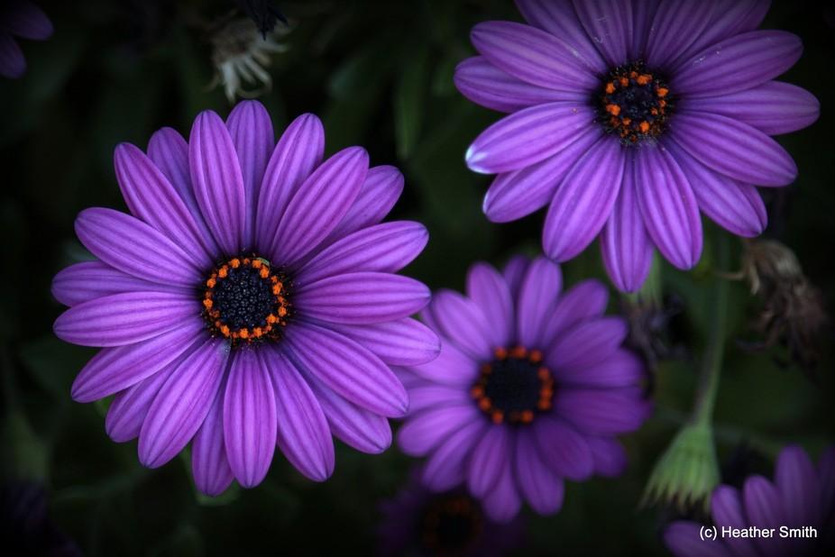 Grandma's garden has the best flowers...