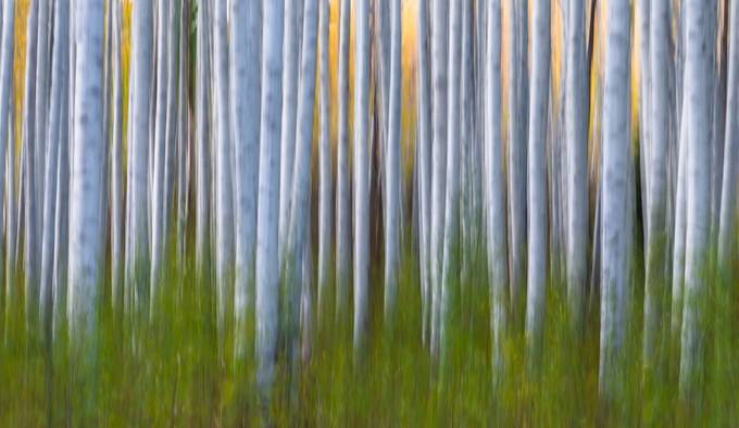 Behind The Lens With Larry Marshall: Artistic Aspens