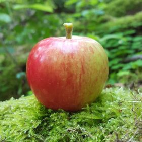 Apple in Forest