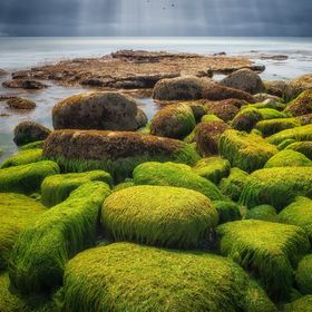 Taken down on the south coast of the UK at Portland Bill, these seaweed covered rocks are a great sight.  They span the whole length of the small...