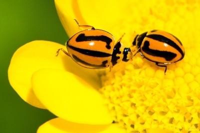 Ladybird Greeting