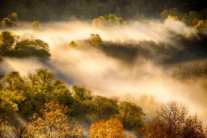 Autumn Mist by IanDMcGregor - Divine Forests Photo Contest