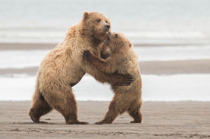 The Waltz by karyntureckischiller - Big Mammals Photo Contest