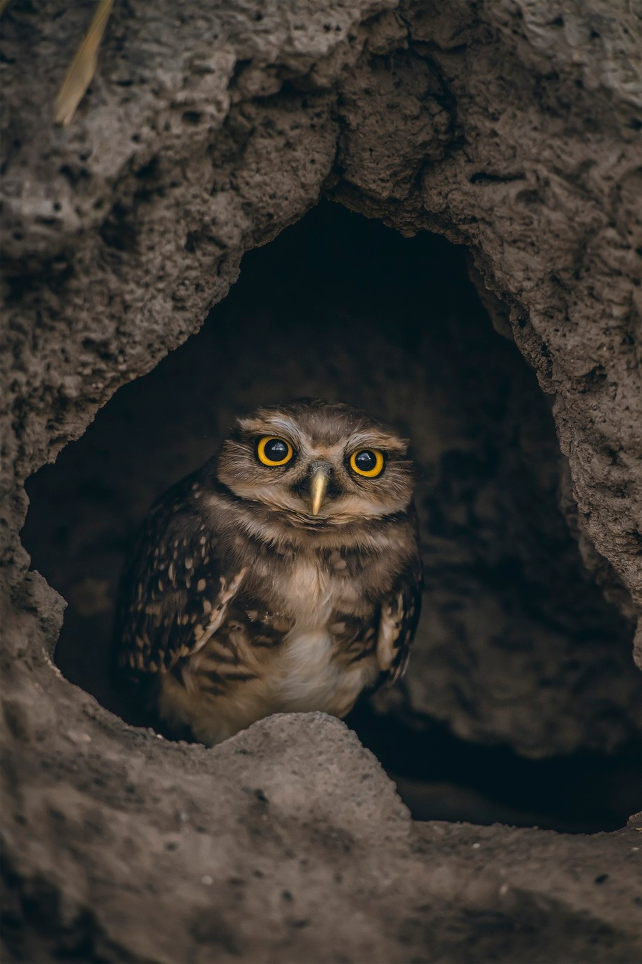 Home Sweet Home by jacksoncarvalho - Picture Owls Photo Contest