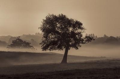 appleton tree early morning