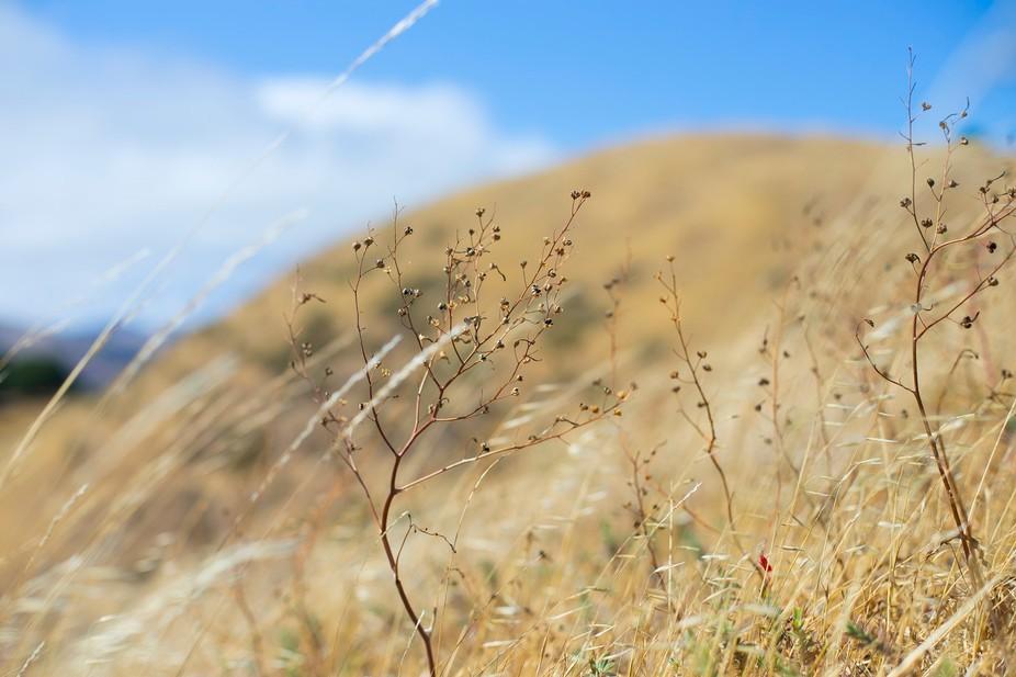 Mount Baldi