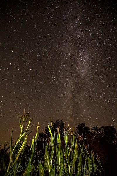 Milky Way Over Corn