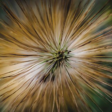Seed pod of one of the local grasses shot from the very tip
