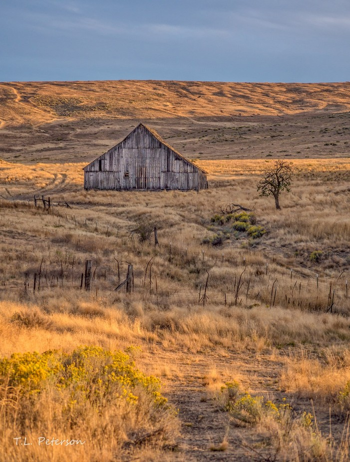 Tygh Ridge Barn at Sunset 2  by Boldstep - Dry Fields Photo Contest