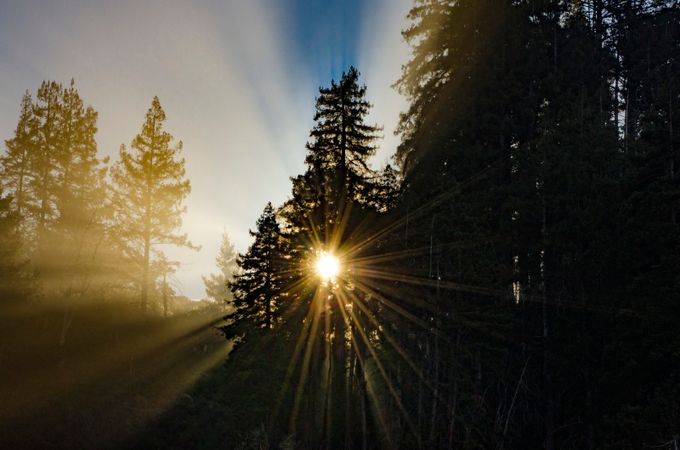 Sunrise through Redwoods by BigSurPhoto - Silhouettes Of Trees Photo Contest