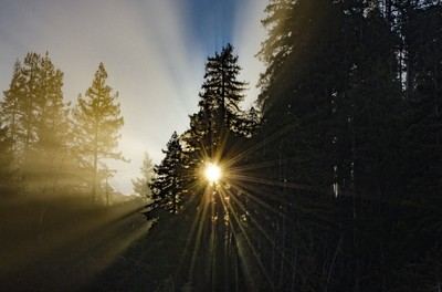 Sunrise through Redwoods