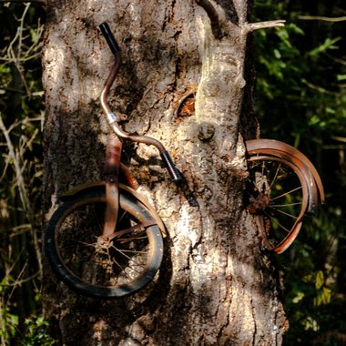 Legend has it that this child's family was very poor and could afford to get him a used Girls bike. Instead of being embarrassed by it at school he hid it in the branch of a tree in the woods, and there it remains.