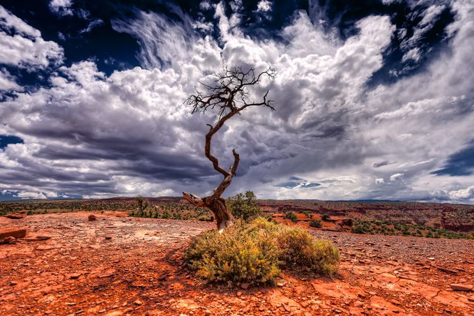 Life or Death by RiccardoMantero - Dry Fields Photo Contest
