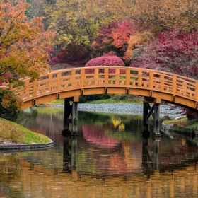 I took this photo while walking the path around the lake in the Japanese Garden in the Missouri Botanical Garden.