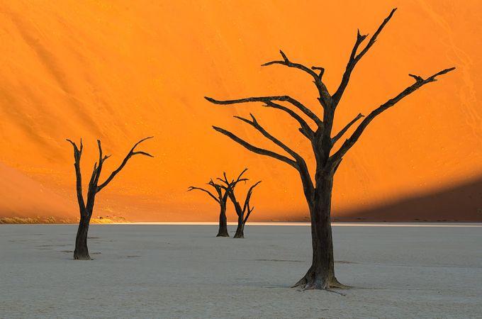 Orange Tones Photo Contest Winners