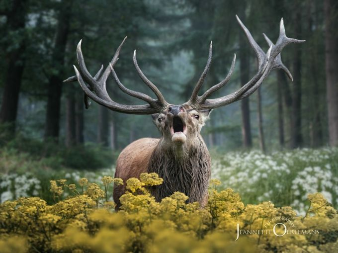 Belling by jeannetteoerlemans - Image of the Year Photo Contest by Snapfish