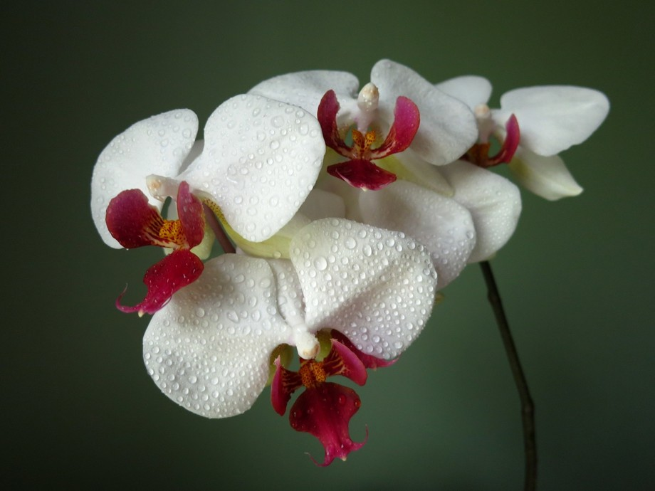 With my love for orchids, I decided to have a photo shoot for them