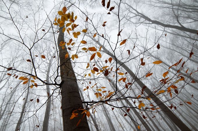 Misty Forest by romansolar - Skywards Photo Contest