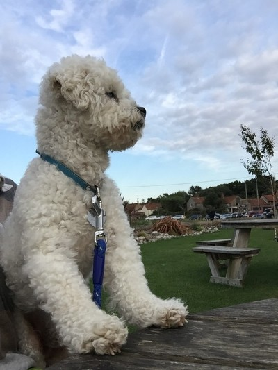 Oscar waiting for lunch