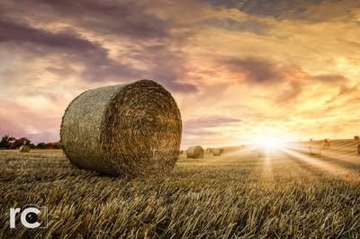 Golden Fields of Cawthorne