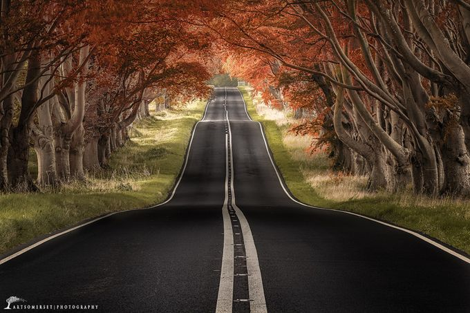 """""""Beech Avenue"""" by artursomerset - Monthly Pro Vol 16 Photo Contest"""