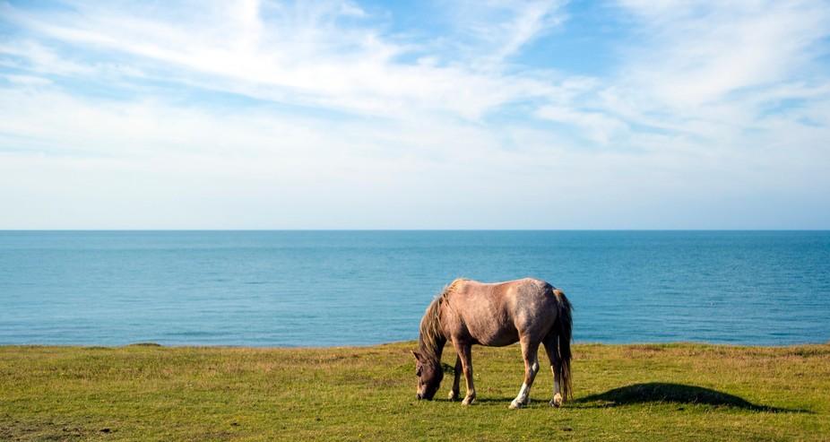 Horse on the Anglesey Coastal Path, Rocky Coast Holyhead