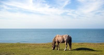 Horse Rocky Coast