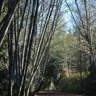 Parksville water shed area - Springwood Park - Parksville, B.C. on Remembrance Day Nov 11, 2014 - DSC_0212