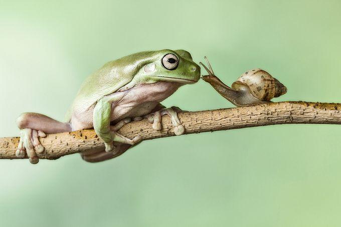 Celebrating Nature Photo Contest Vol 2 Winners
