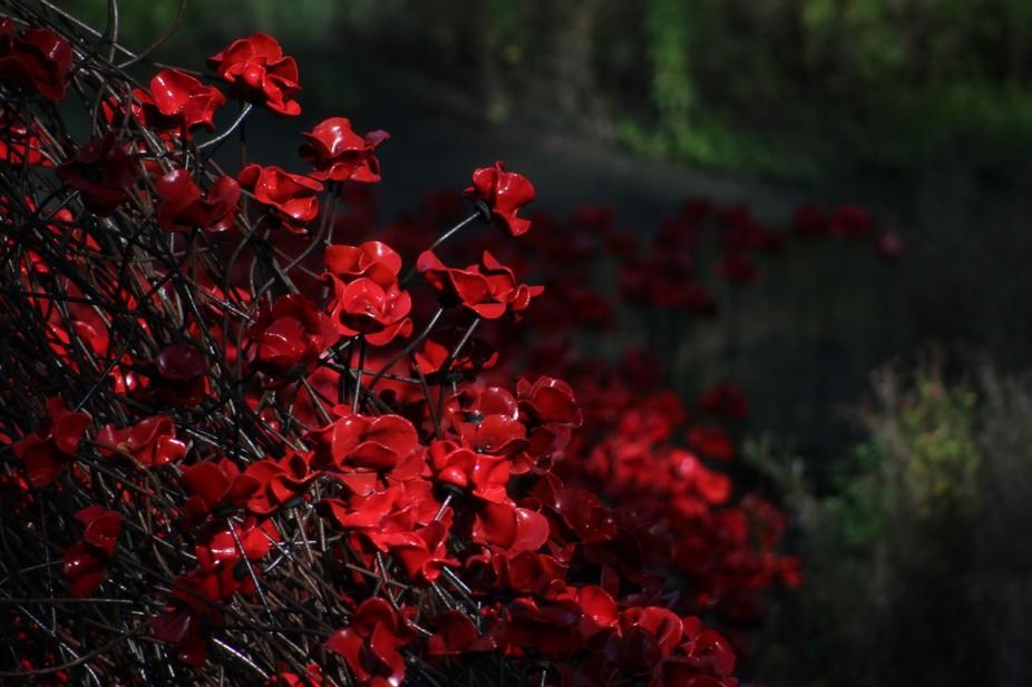 Poppy installation at Yorkshire Sculpture Park