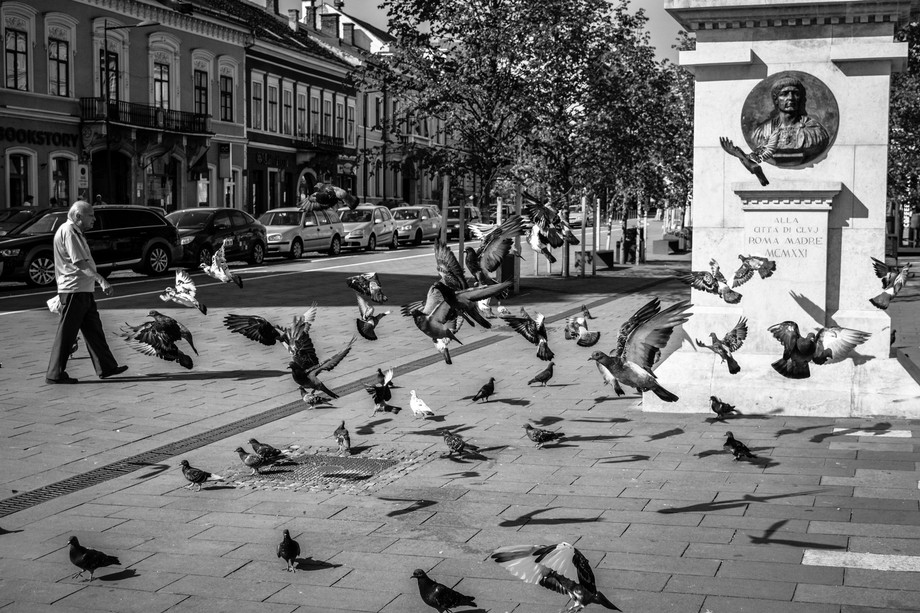 Pigeons flying by in the city of Cluj, Romania