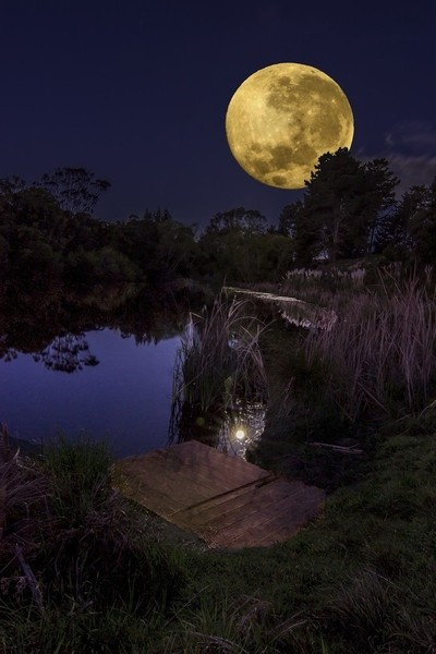 Forest Lakes Moon