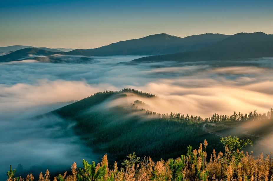 Foggy Valley Parrot Peak