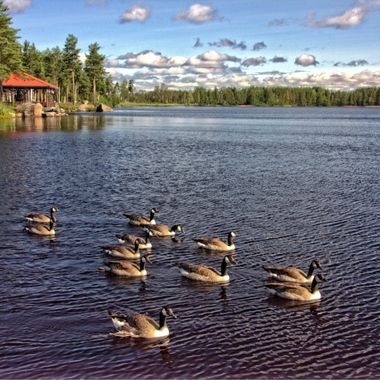 I took this photo when I was in Sweden this year, in June. We were driving to the airport and we stopped at a cafe, near a lake.  The view of the lake was wonderful and I was particularly interested in the ducks.