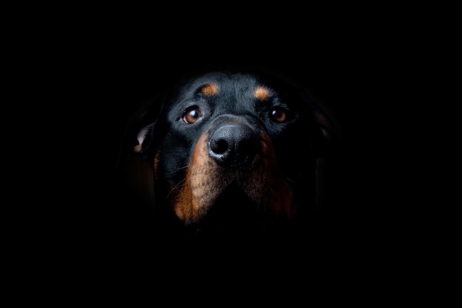 my rottweiler Tito