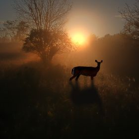 A composite of a sunrise along the Riverside Trail near Almonte and a deer from our front yard.