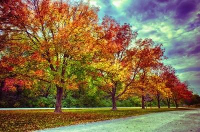 Autumn Tree Line at Busch