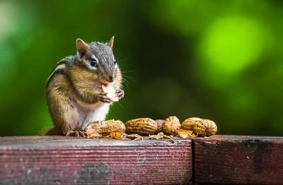 Peanut Lover