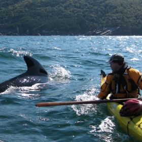 A whale decided to check out a kayaker off Cape Breton Island, Nova Scotia. Must have been exciting for the kayaker!