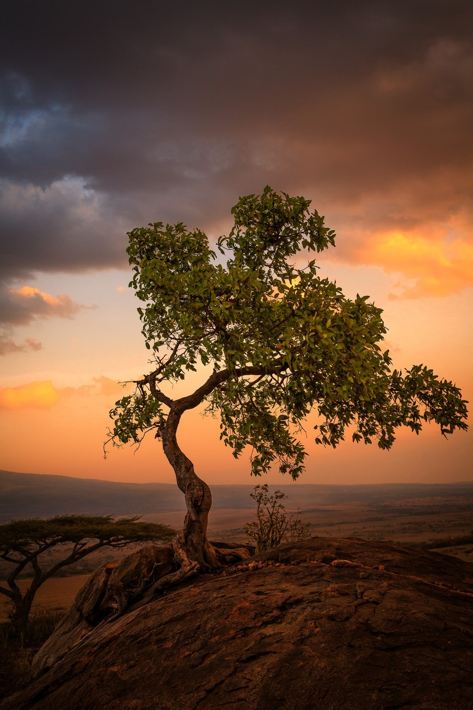 Tree of life by JADUPONT - The Four Elements Photo Contest