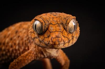 George the Gecko